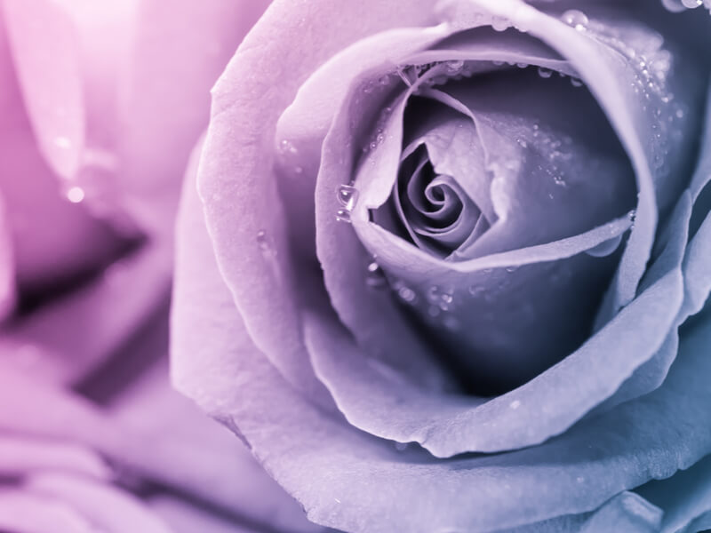 6 Ways to Organise the Perfect Funeral